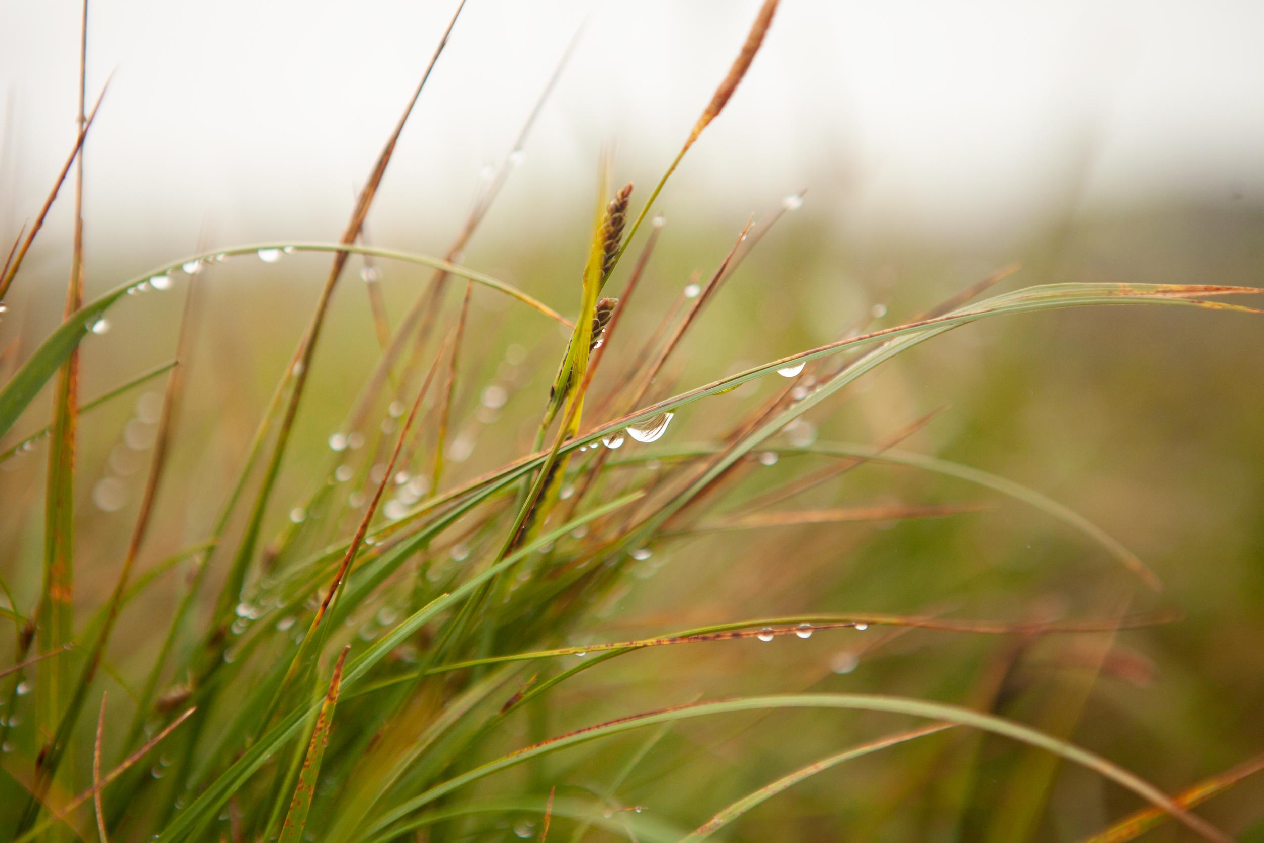 dew-drop•
